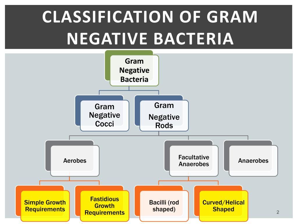 PPT - Practical Medical Microbiology PowerPoint Presentation - ID