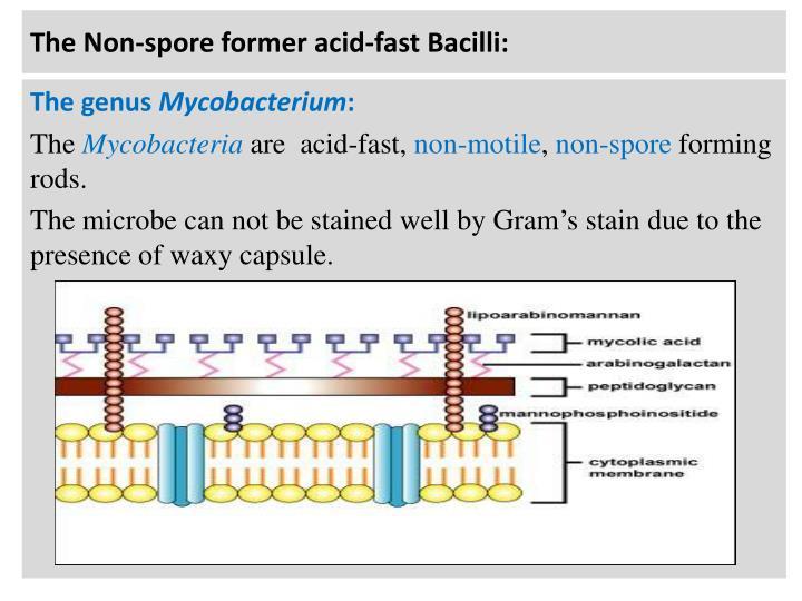 The Non-spore former acid-fast Bacilli: