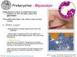 prokaryotes glycocalyx