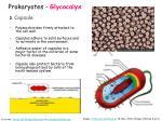 prokaryotes glycocalyx1