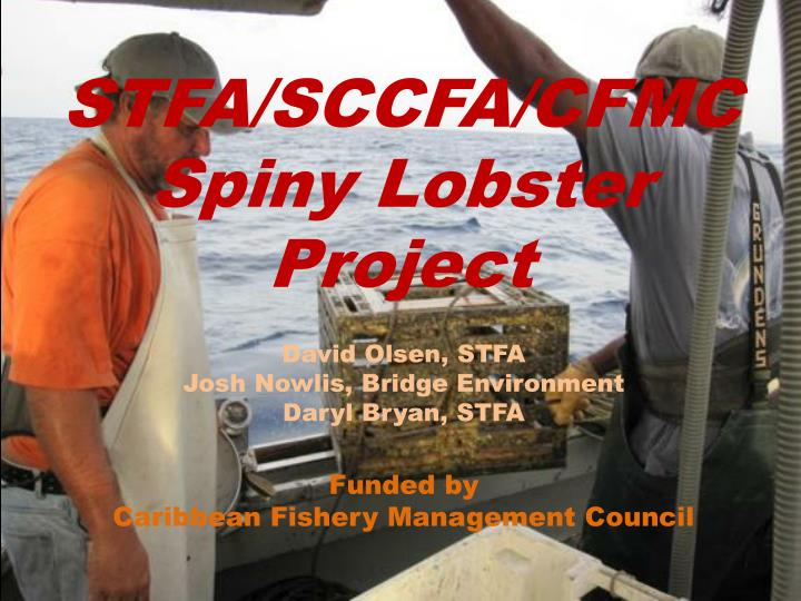 stfa sccfa cfmc spiny lobster project n.