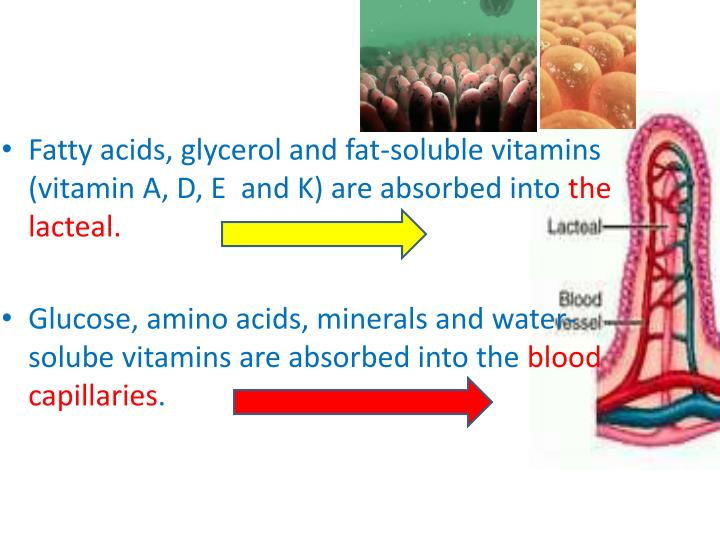 Fatty acids, glycerol and fat-soluble vitamins (vitamin A, D, E  and K) are absorbed into