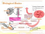 biological basics