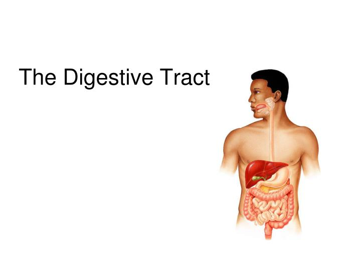 Ppt The Digestive Tract Powerpoint Presentation Id2272586