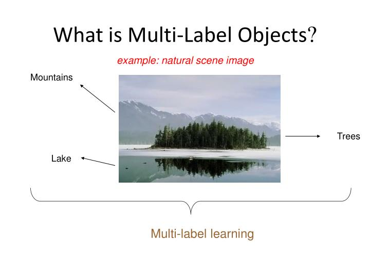 What is multi label objects