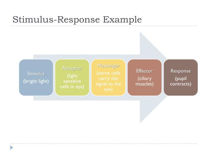 Stimulus-Response Example