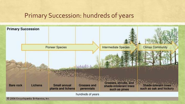 Primary Succession: hundreds of years