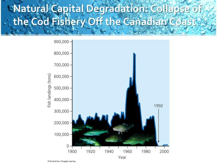 Natural Capital Degradation: Collapse of the Cod Fishery Off the Canadian Coast