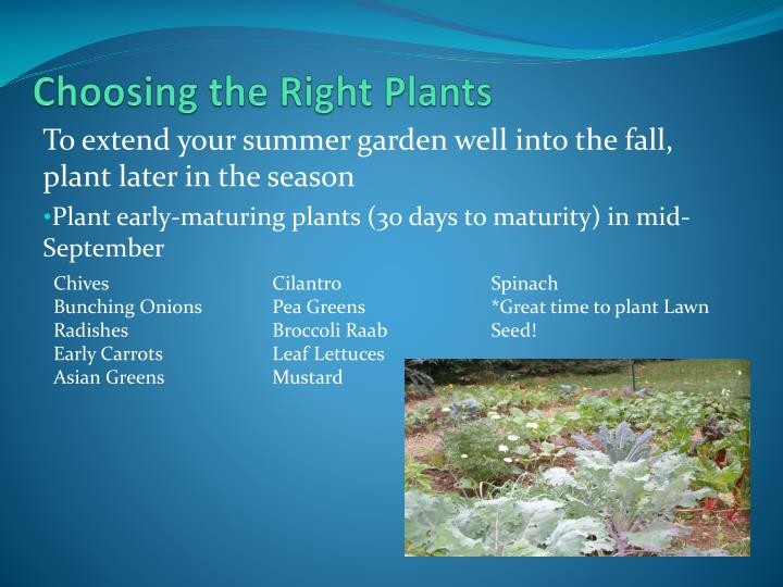 Choosing the Right Plants