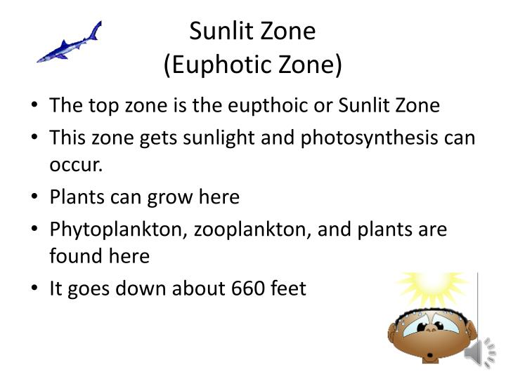 Sunlit zone euphotic zone