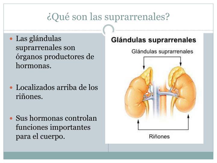 PPT - Síndrome de Addison o insuficiencia suprarrenal primaria ...