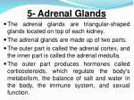 5 adrenal glands