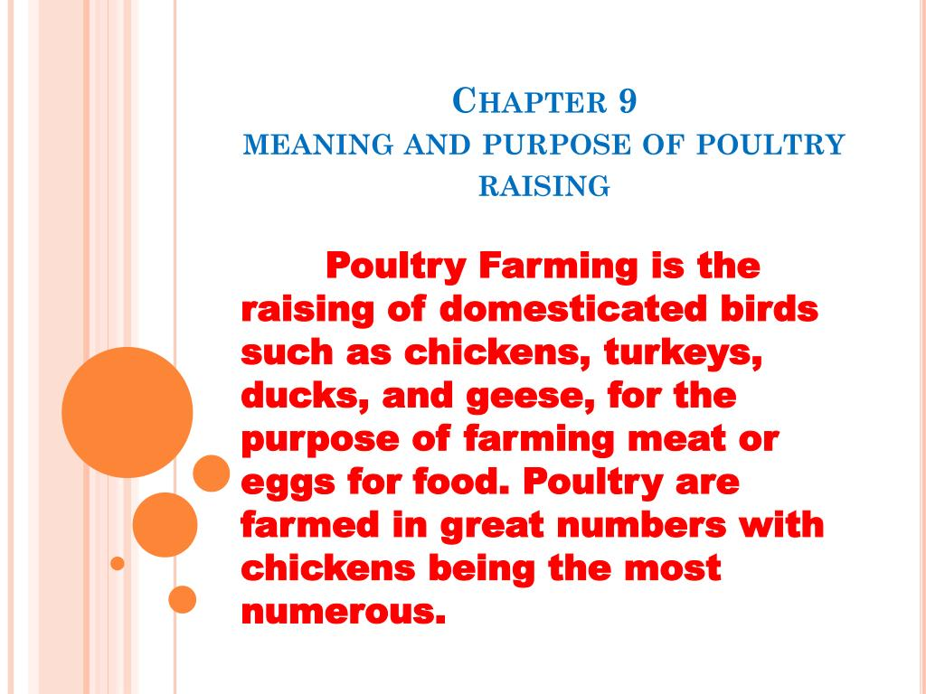 PPT - Chapter 9 meaning and purpose of poultry raising