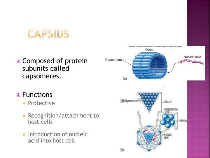 Capsids