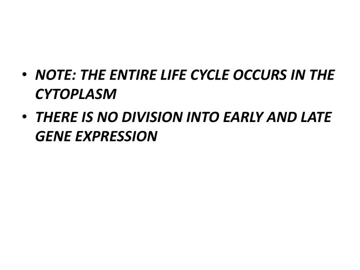 NOTE: THE ENTIRE LIFE CYCLE OCCURS IN THE CYTOPLASM