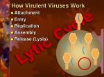 how virulent viruses work