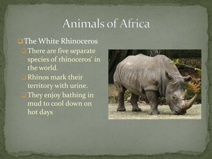 Animals of africa1