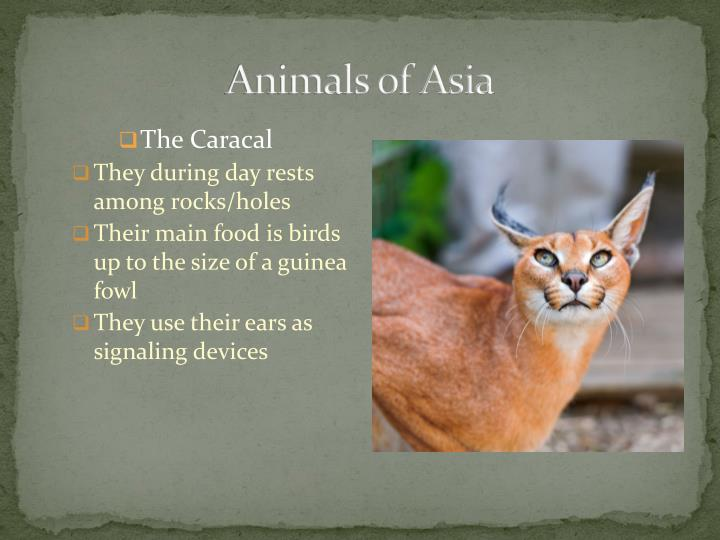 Animals of Asia