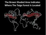the b rown shaded a rea indicates where the taiga forest i s l ocated through