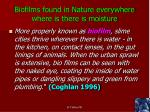 biofilms found in nature everywhere where is there is moisture