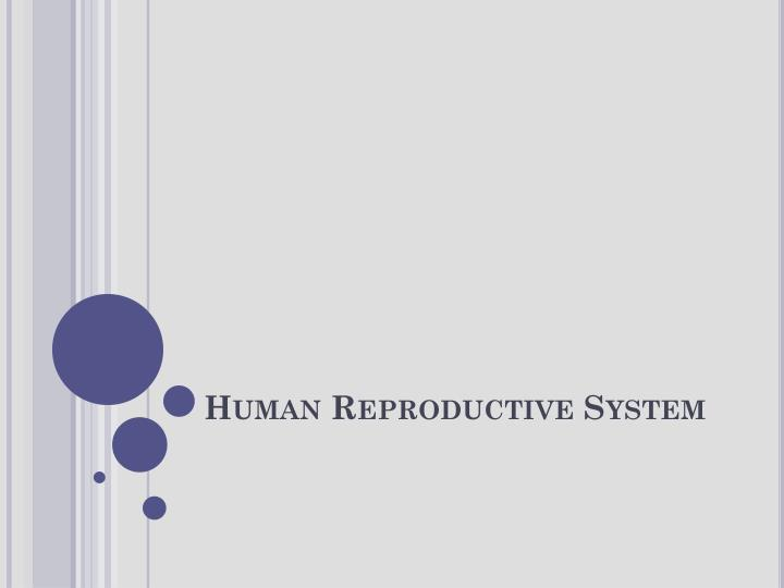 human reproductive system n.