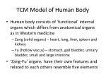 tcm model of human body