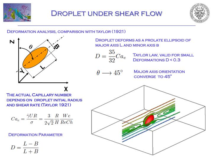 Droplet under shear flow