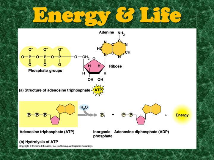 Energy & Life