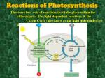 reactions of photosynthesis3