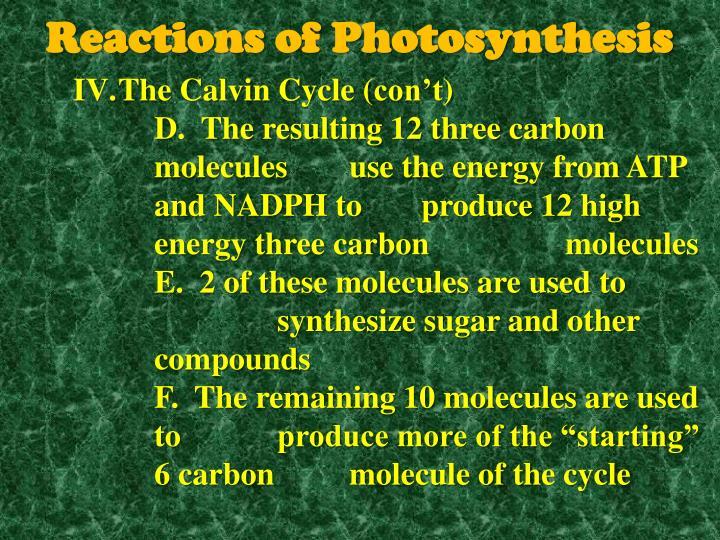 The Calvin Cycle (