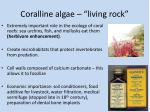 coralline algae living rock