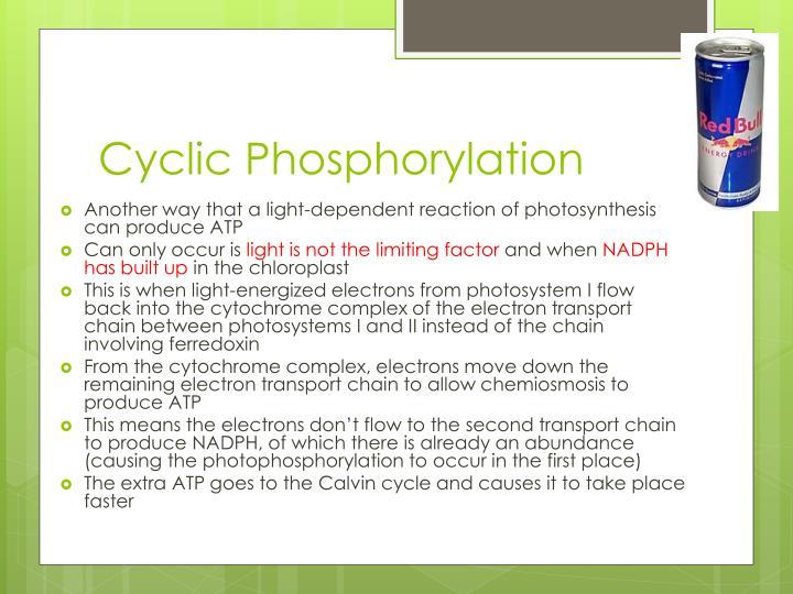 Cyclic Phosphorylation