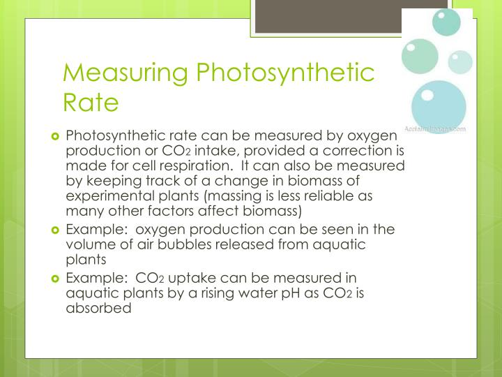 Measuring Photosynthetic Rate
