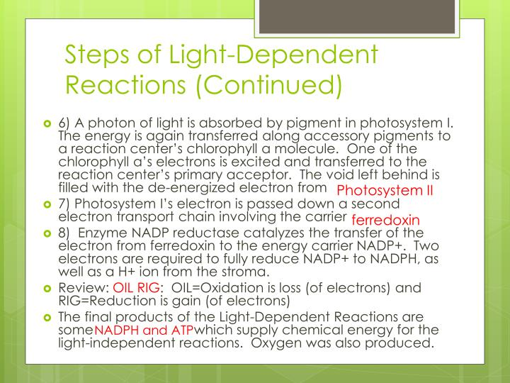 Steps of Light-Dependent Reactions (Continued)