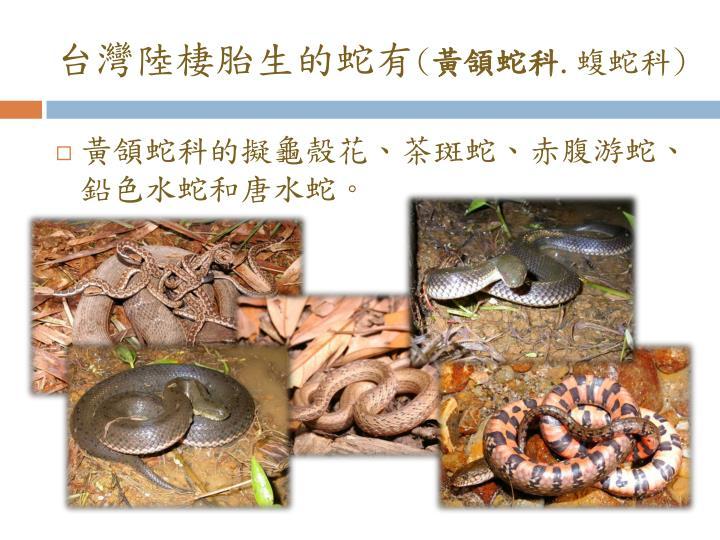 台灣陸棲胎生的