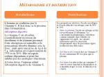 m tabolisme et distribution4