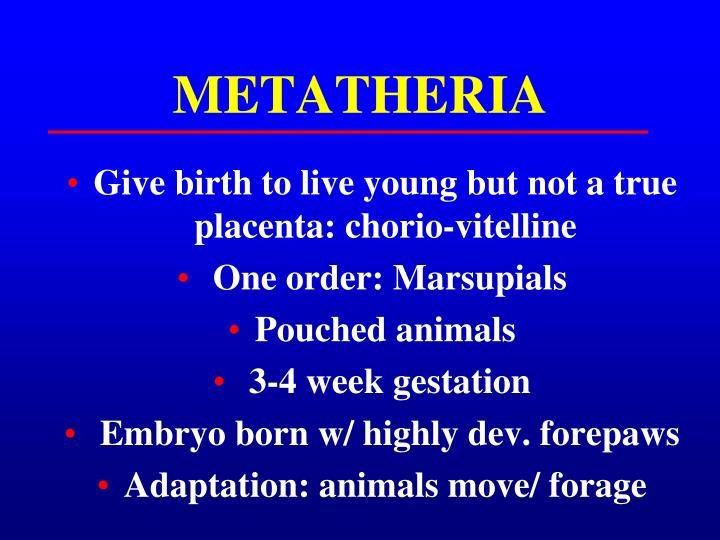 METATHERIA