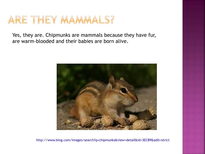 are they mammals n.