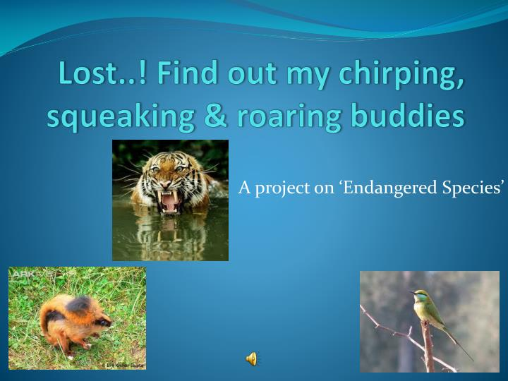 Lost find out my chirping squeaking roaring buddies