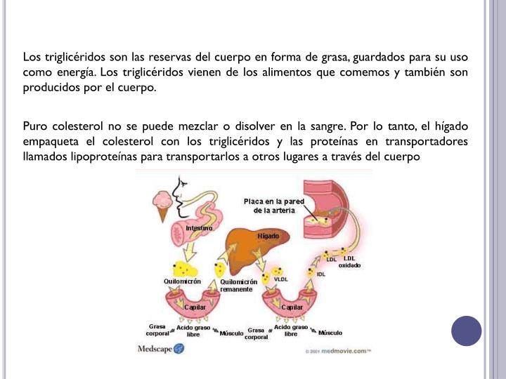 Los triglicéridos son las reservas del cuerpo en forma de grasa, guardados para su uso como energía. Los triglicéridos vienen de los alimentos que comemos y también son producidos por el cuerpo.