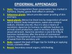 epidermal appendages