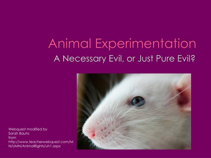 the horrors of animal experimentation essay