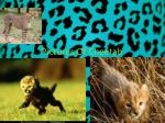 p ictures of cheetah