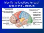 identify the functions for each area of the cerebrum