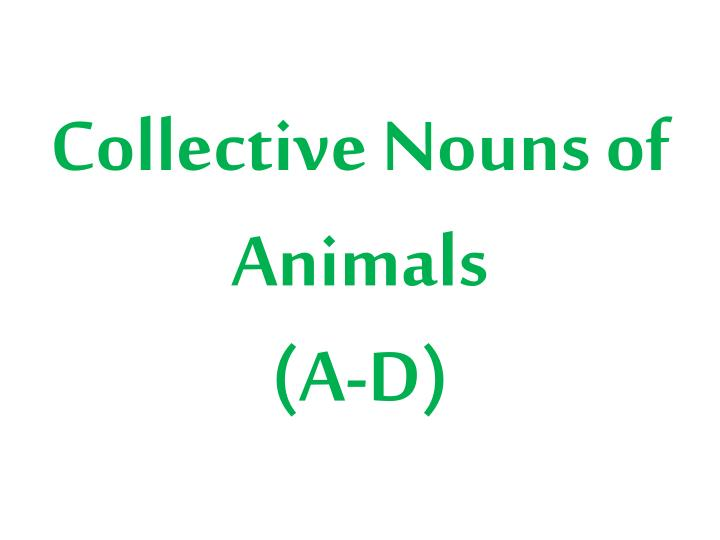 collective nouns of animals a d n.