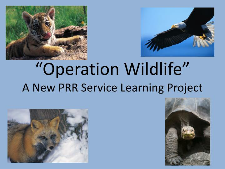 operation wildlife a new prr service learning project n.