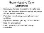 gram negative outer membrane1