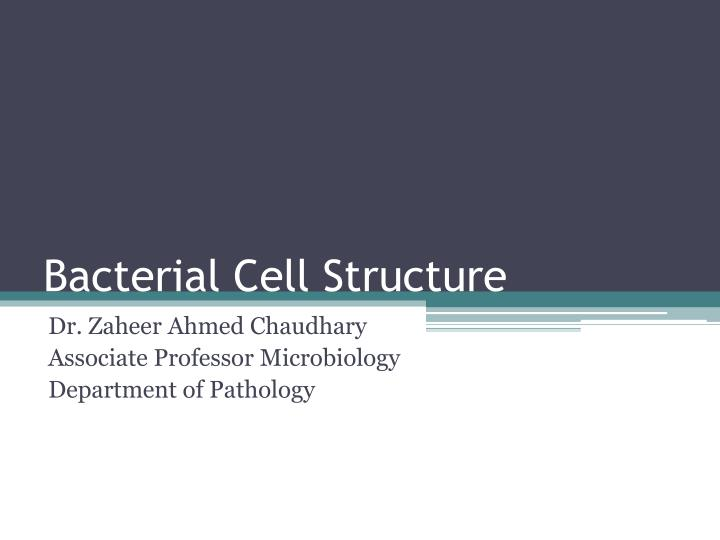 bacterial cell structure n.
