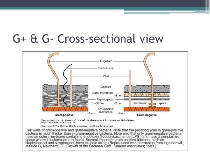 G+ & G- Cross-sectional view