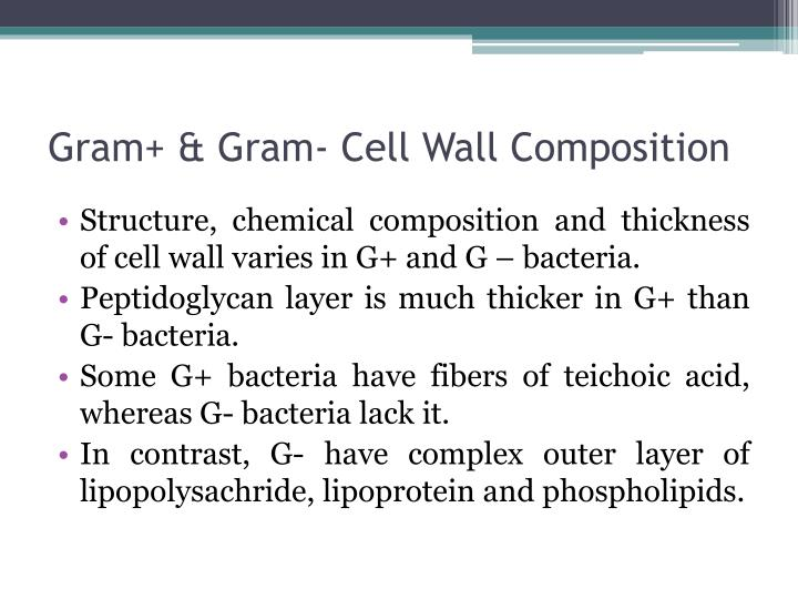 Gram+ & Gram- Cell Wall Composition
